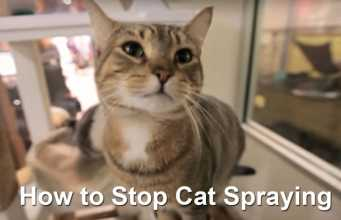 How to Stop Cat Spraying and Peeing
